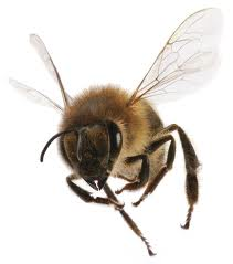 Insect_Btes