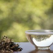 چای سفید، برترین نوع چای برای سلامتی