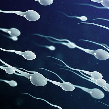 تاثیر فرش، موکت و لباس بر کیفیت اسپرم مردان !