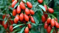 آنفلوانزا را با این میوه درمان کنید