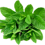 با خواص دارویی گیاه نعناع آشنا شوید