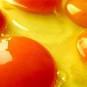 زرده تخم مرغ برای درمان آسیب های مو