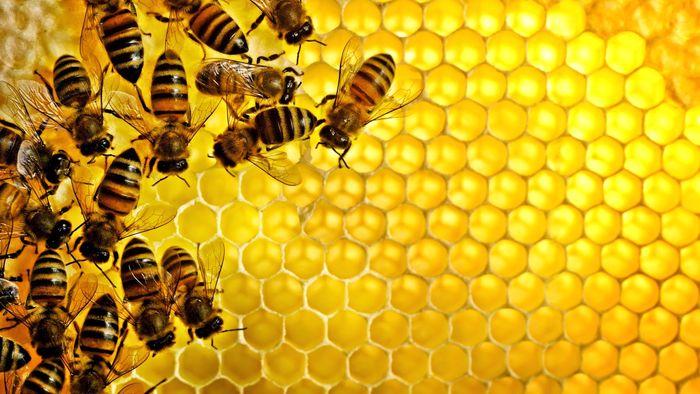 خواص عجیب و فوق العاده عسل