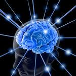 ساختارهای سیستم عصبی