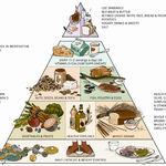هرم غذایی چیست؟