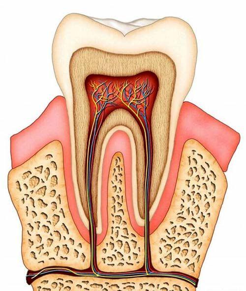اجزای دندان و نحوه ی پوسیده شدن آن