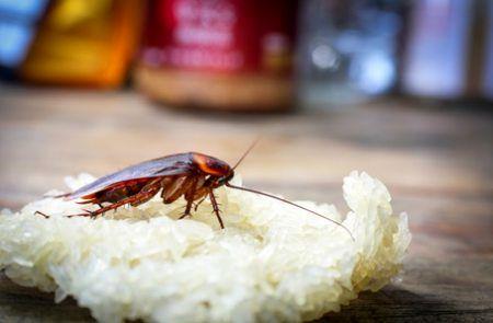 از بین بردن سوسکهای خانگی با سنجاق