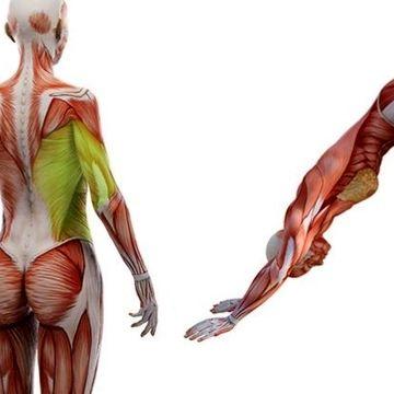 حرکات کششی که صبح انجام می دهید، بدن را قوی و انعطاف پذیر می کند