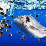 آلودگی های موجود در آبزیان