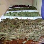 فرآوری گیاهان دارویی