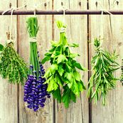 گیاهانی که در بهبود مغز مه آلود موثر هستند