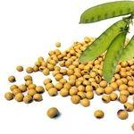 سویا منبع فوق العاده پروتئین