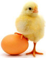 نکاتی درباره تخم مرغ که نمی دانستید